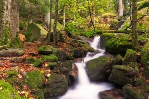foresta-nera-sud-germania-