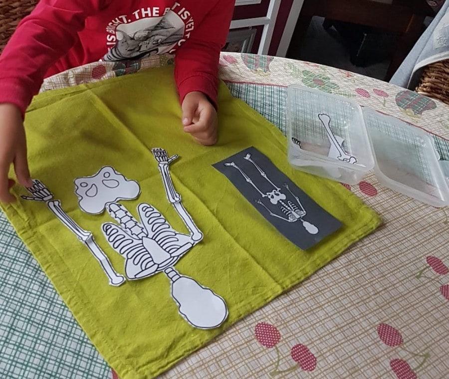 scheletro-montessori