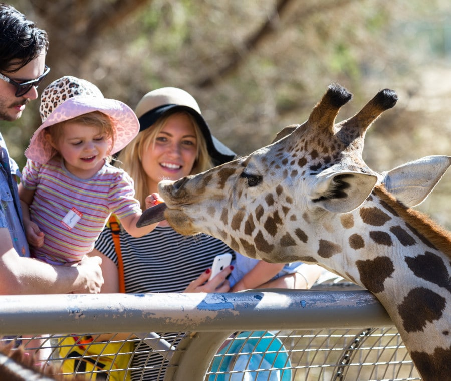 famiglia-zoo-italia
