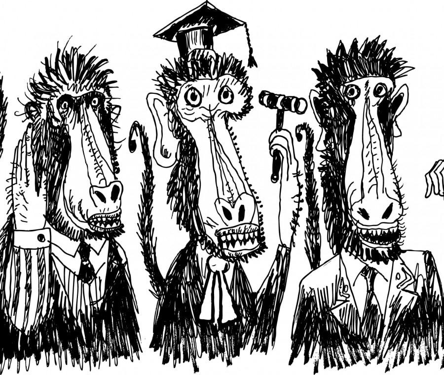 scimmia-giudice