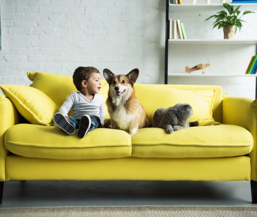 bambino-cane-gatto