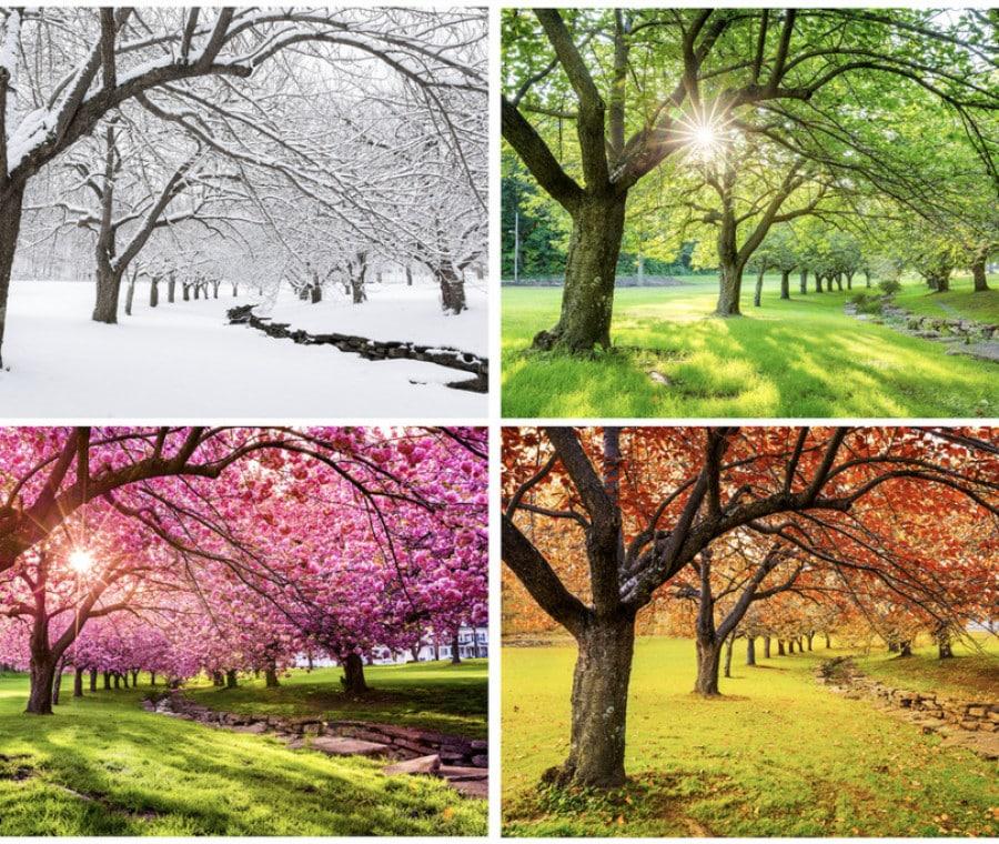 come-spiegare-le-stagioni-ai-bambini