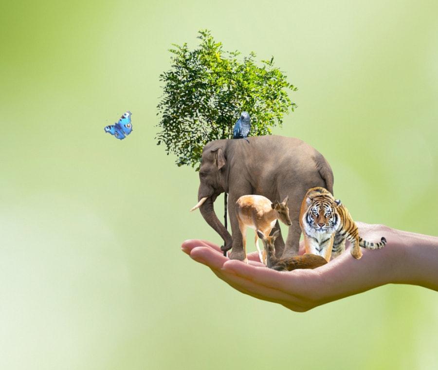 giornata-mondiale-ambiente