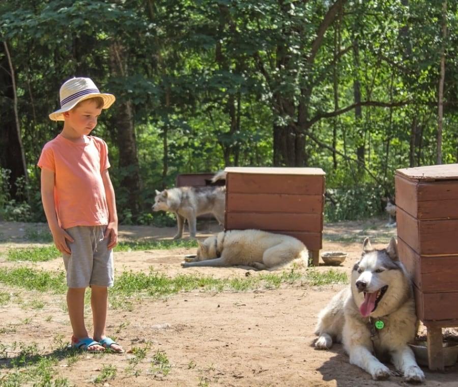adozione-animale-a-distanza