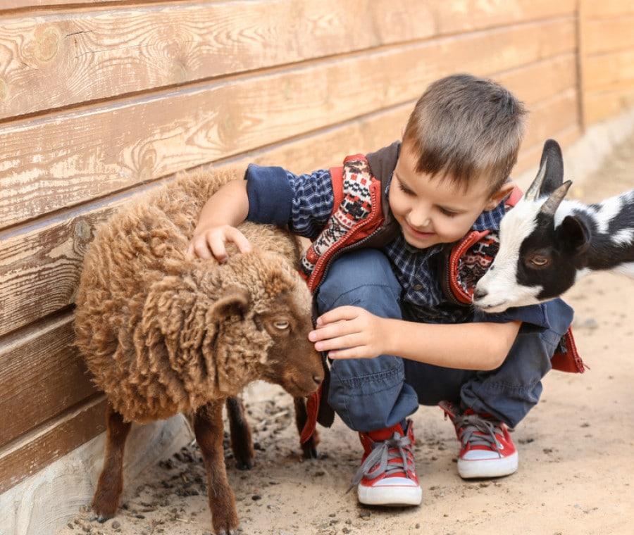 parchi-per-bambini-con-animali