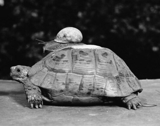 lumaca_tartaruga