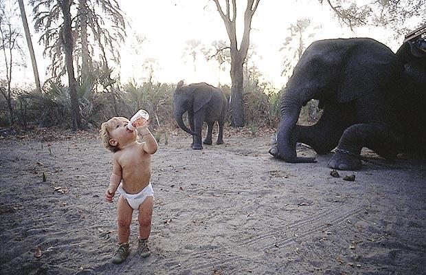 Tippi_elefante