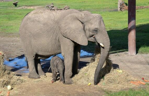 nome-elefante-ok