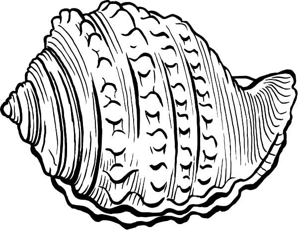 Conchiglietta-Convertito-.jpg.180x120