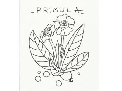 disegno-primula-primavera-400.180x120