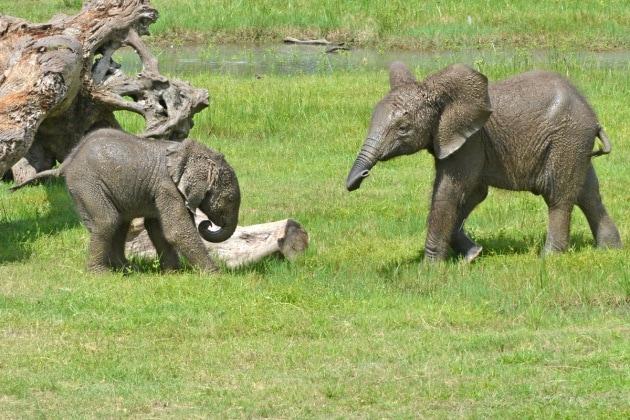 nome-elefante-4