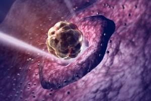 ovulazione-ovulo