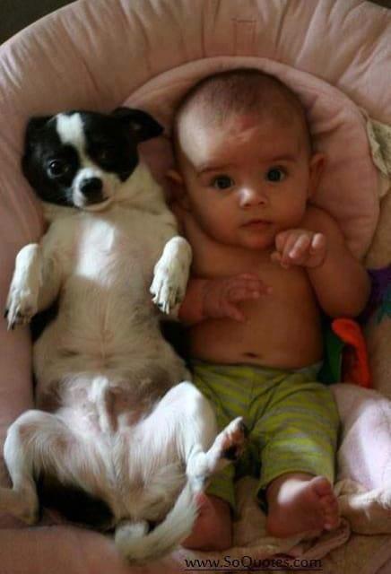 Risultati immagini per immagini belle di cani