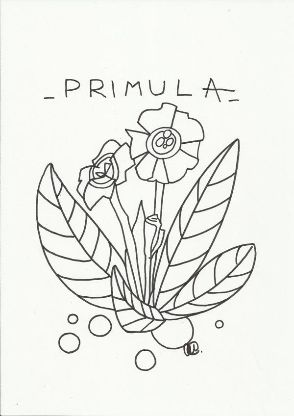 disegno da colorare la primula