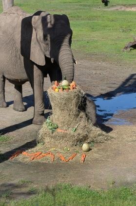 nome-elefante