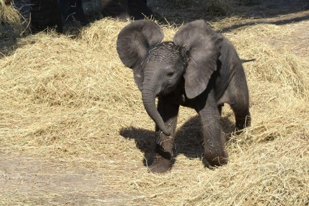 nome-elefante-3