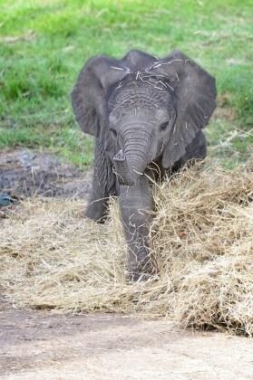 nome-elefante-6