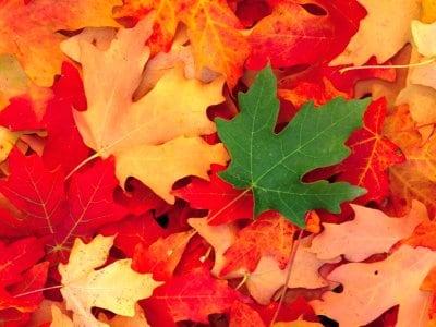 Il gioco delle foglie