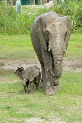 nome-elefante-7