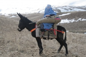 asinello-afghanistan.180x120