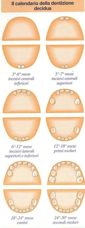 Calendario Dentini.Il Calendario Dei Dentini Da Latte Nostrofiglio It