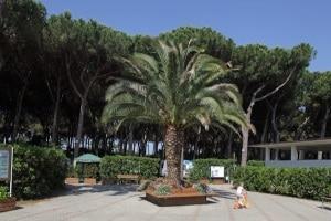 Camping_Village_Voltoncino_Toscana.jpg.180x120