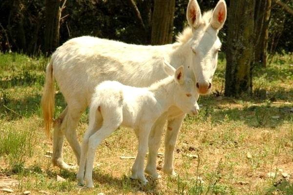 I 10 zoo pi belli in italia for Piani di fattoria di 2000 piedi quadrati