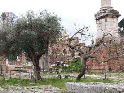 Roma visita al foro romano con i bambini for Arredi sacri roma