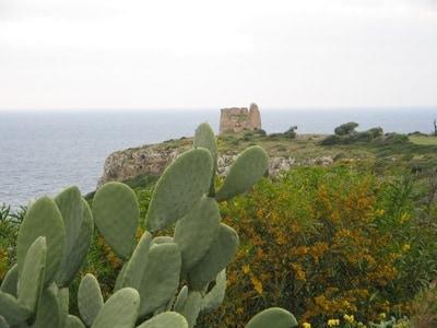 torre_costiera_paesaggio2.jpg