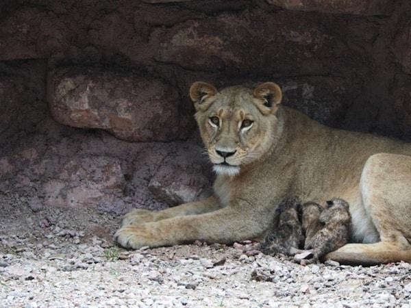 I 10 zoo pi belli in italia - Immagini di animali dello zoo per bambini ...