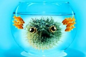 pesce_aprile
