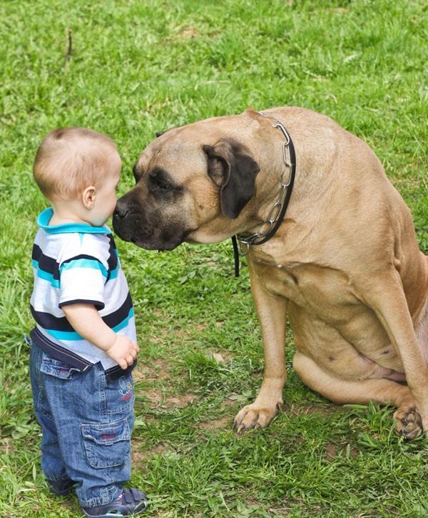bambino-cane.180x120