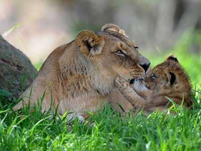 animal_parents_with_kids_14