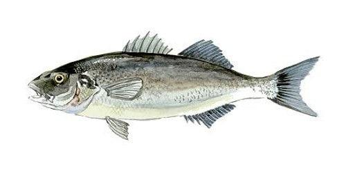 Pesce per tutti i gusti for Casa del merluzzo