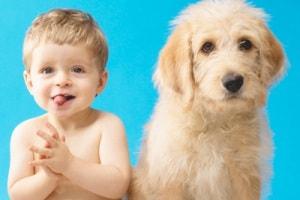 cane-bambino1