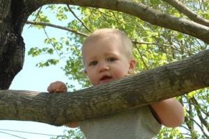 bambino_albero