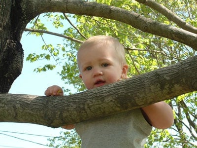 bambino_albero.180x120