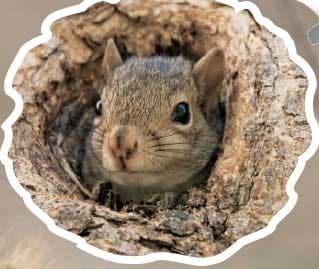 Disegna e colora lo scoiattolo