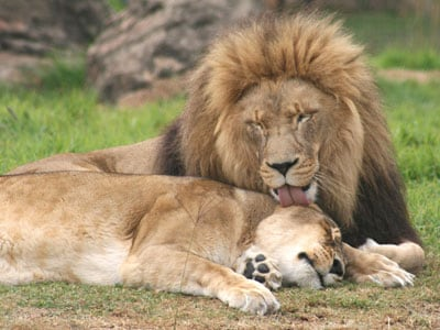 parko_safari.jpg