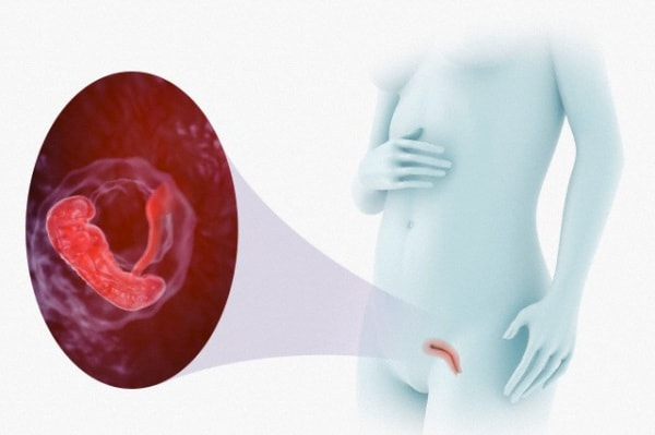 embrione-donna1