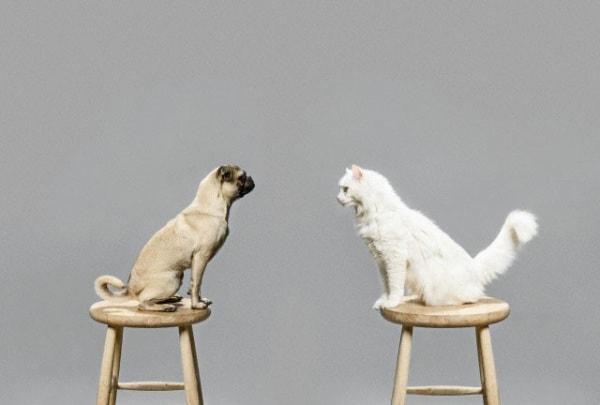 cane_gatto.180x120