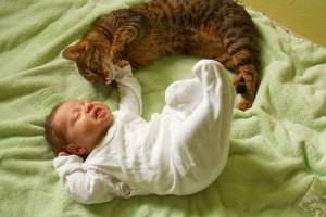 gatto-neonato.180x120