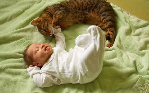 gatto-neonato