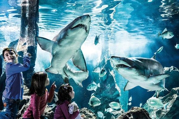 acquario-cattolica-squali