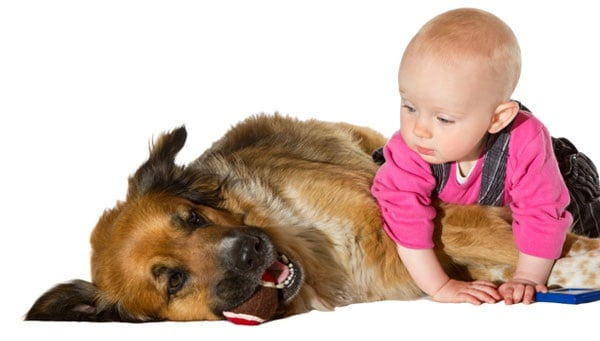 cane-bambino.180x120