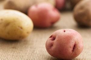 la_corsa_delle_patate.180x120