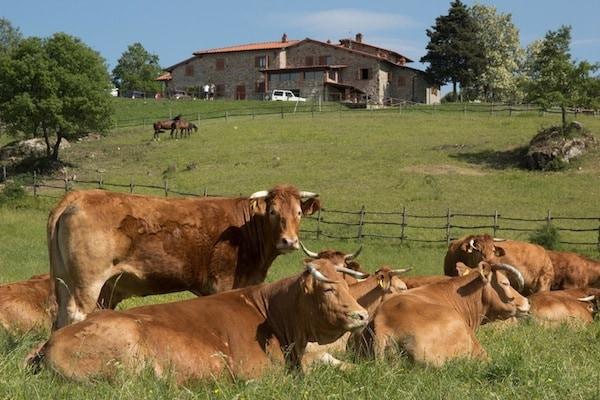 Agriturismo_La_Collina_Delle_Stelle_Toscana_Bibbiena.jpg.180x120