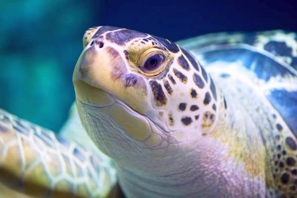 L 39 acquario di alghero for Vasche per tartarughe marine