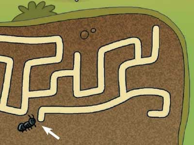 labirinto-nel-bosco-300.180x120