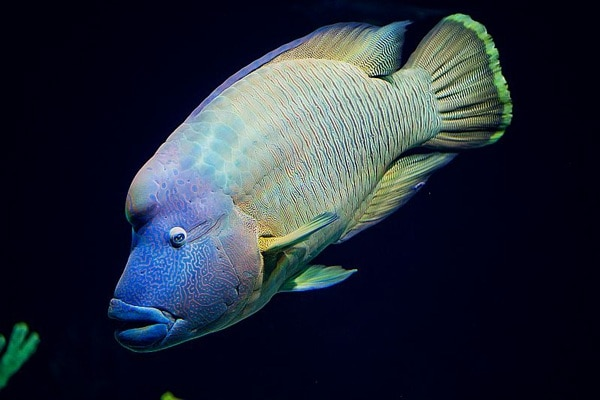 acquario-livorno-pesce.180x120